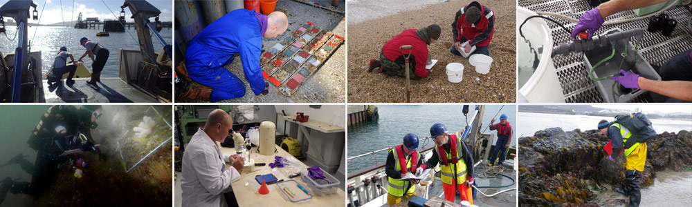 Montage of images involving staff working in our varying service areas
